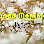 Best Flower Good Morning Images photo for whatapp