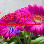 Best Flower Good Morning Images wallpaper pictures free download