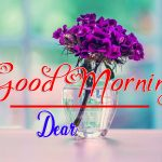 85+ Best Flower Good Morning Images