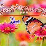 Best Flower Good Morning Images free download
