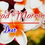 Best Flower Good Morning Images photo free download
