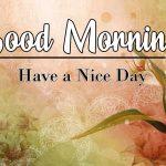 Best Flower Good Morning Images wallpaper photo hd for whatsapp