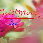 Best Flower Good Morning Images photo pics hd download