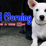 Best Puppy Lover Good Morning Photo Images