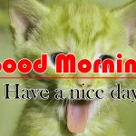 Cute Funny Good Morning IMages Hd Free Download