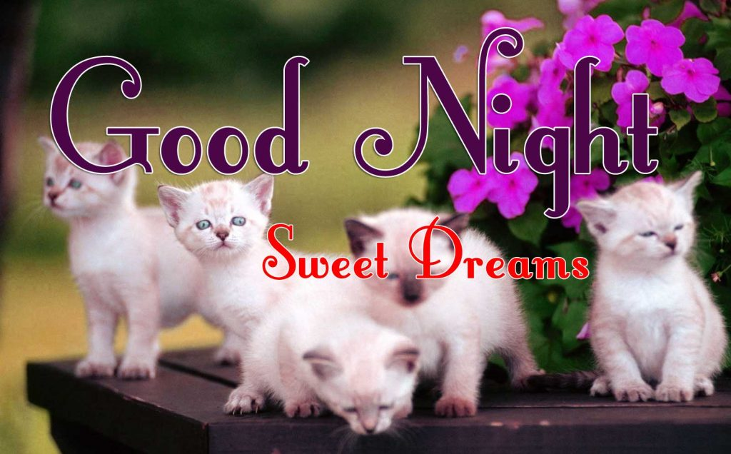 Beautiful Free Cute Good Night Images Wallpaper Free Download With Puppy