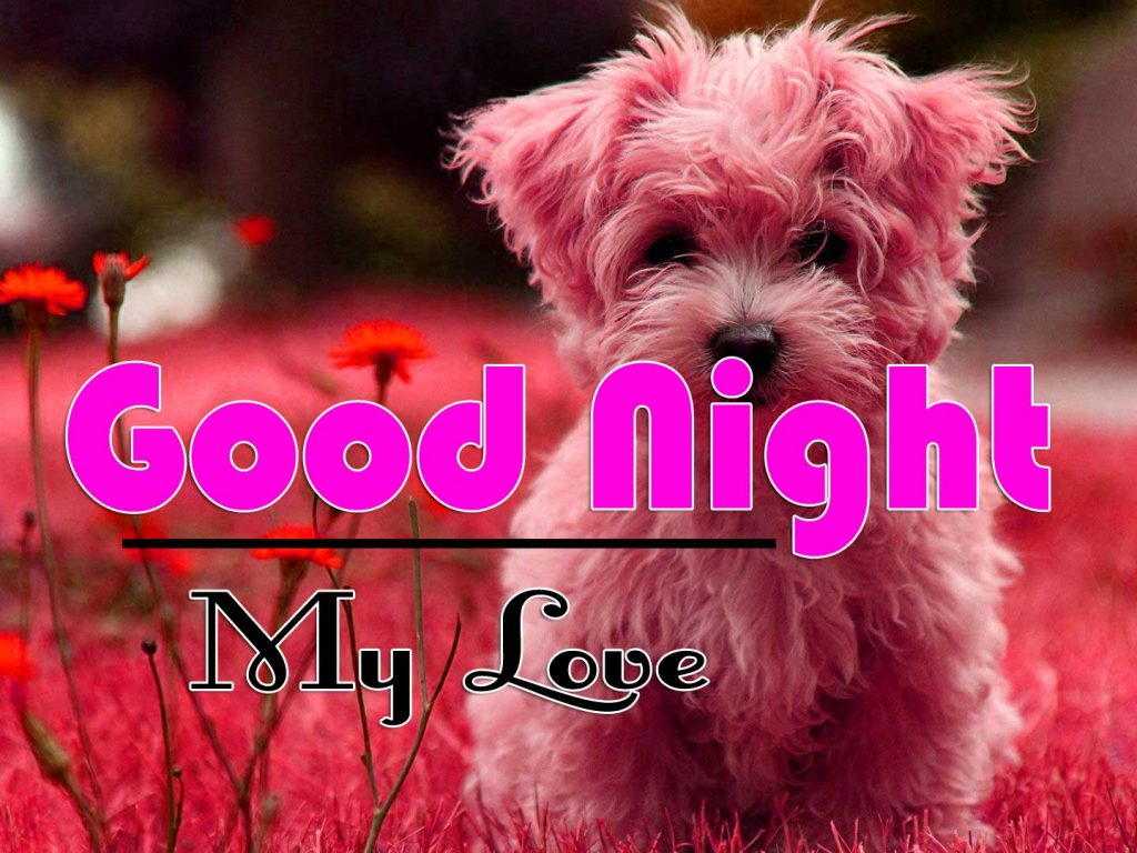 Beautiful Free Cute Good Night Images Wallpaper Download With Puppy