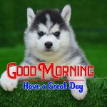 Cute Puppy Lover Good Morning Images