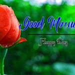 Flower Good Morning Wishes Pics Pictures With Rose