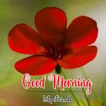 New Best Flower Good Morning Wishes Images Pics Download