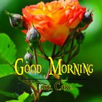 Flower Good Morning Wishes Images HD