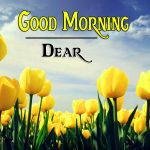Flower Good Morning Wishes Wallpaper Free
