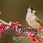Best Latest Flower Good Morning Wishes Pics Download