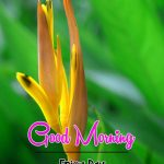 New Top Latest Flower Good Morning Wishes Pics Images Download