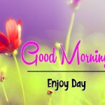 New Free Latest Beautiful Flower Good Morning Wishes Pics Download