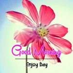 Free Best Latest Beautiful Flower Good Morning Wishes Pics Download