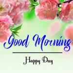 Beautiful Flower Good Morning Wishes Wallpaper Download