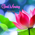 Beautiful Flower Good Morning Wishes Wallpaper Pics Download