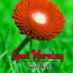Beautiful Flower Good Morning Wishes Pics Download