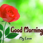 Beautiful Flower Good Morning Wishes Wallpaper Latest Download