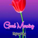 Sweet Beautiful Flower Good Morning Wishes Pics Images Download