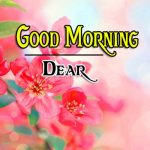 New FREE Beautiful Flower Good Morning Wishes Images Download