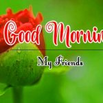 Beautiful Flower Good Morning Wishes Wallpaper New Download
