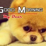 Free Puppy Lover Good Morning Images Hd