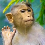 Funny Face Whatsapp DP Images for Monkey