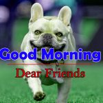 Funny Good Morning Photo Free Hd