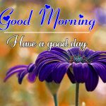 Flower Free All Good Morning Images Pics Download