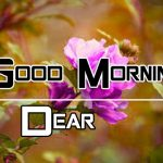 All Good Morning Images Pics Free New Download