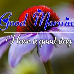 All Good Morning Images Wallpaper Free Download