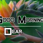 New Top Free Good Morning Images Pics Download