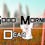 Good Morning Images Wallpaper Free for Whatsapp