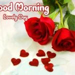 Red Rose Friend Good Morning Images Pics Download