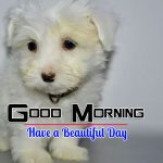 Hd Download Puppy Lover Good Morning Images
