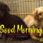 Hd Puppy Lover Good Morning Images Free