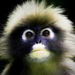 New Top Free Funny Monkey Images Pics Download