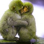 Funny Monkey Images Pics Download Free