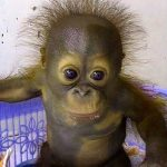 Funny Monkey Images Wallpaper Free Download