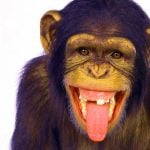Funny Monkey Images Pic Download