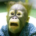 New Best Funny Monkey Images Pic Download