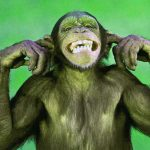Funny Monkey Images Pics Images Download Free