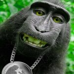 New Best Funny Monkey Images Pics Download Free
