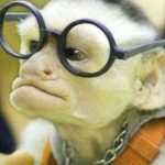 Funny Monkey Images Pics Free