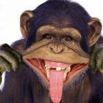 Funny Monkey Images Pic Download Free