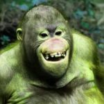 Fresh Funny Monkey Images Pics Download