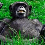 Funny Monkey Images Photo Download