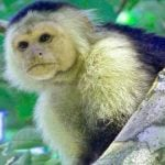 Funny Monkey Images Pics HD